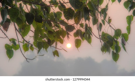glimpse of sun from leaves of peepal tree on misty morning in the village of varanasi