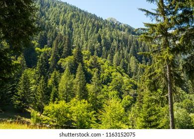 Glimpses of Gressoney, Aosta, Valle d'Aosta, Italy
