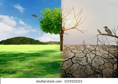 Global warming concept before and after Live and dead big Drought and tree green nature landscape.