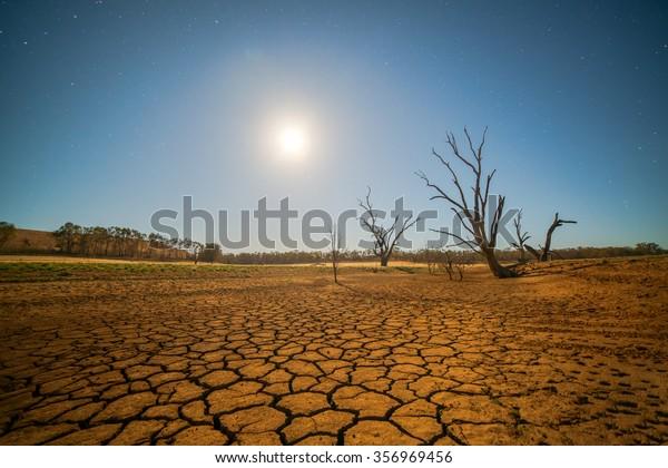 Concepto de calentamiento global. árbol muerto bajo el calor del atardecer, el paisaje desierto sacudido por la sequía