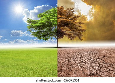 A global warming concept image showing the effect of arid land with tree changing  Concept of climate change.