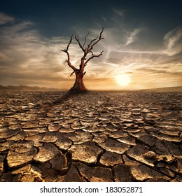Global warming concept. Lonely dead tree under dramatic evening sunset sky at drought cracked desert landscape