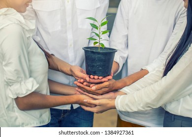 Global warming earth concept.A group of volunteer friends collaborated to plant trees to do CSR Corporate Social Responsibility  and Create environmental friendliness, reduce global warming.