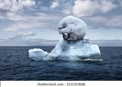 globally warming. climate change. the bear cries closing its face with its paws. polar bear sits on a melting glacier in the middle of the ocean. ecocatastrophe. ecological catastrophy
