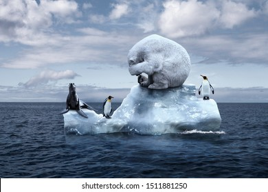 globally warming. climate change. the bear cries closing its face with its paws. polar bear, penguins and fur seal sits on a melting glacier in the middle of the ocean. ecological catastrophe
