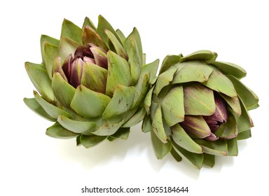 globe artichoke isolated on white background