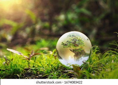 globe glass on grass with sunshine. environment concept