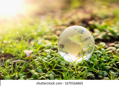globe glass on green grass with sunshine background. environment concept