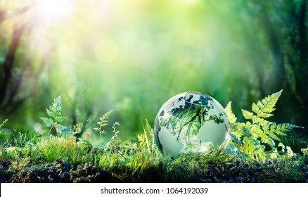 Globe On Moss In Forest - Environmental Concept  - Shutterstock ID 1064192039