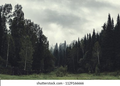 Gloomy atmosphere of evening in dark forest. High firs and pines in fog. Overcast weather and spooky haze in taiga. Mist among layers from trees. Eerie landscape in horror style in faded tones.
