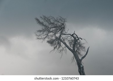 Gloomy bare tree with a cloudy background