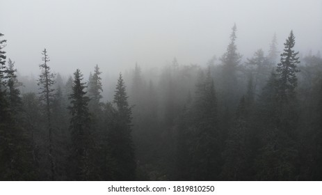 Gloomy foggy forest in the mountains