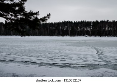 Gloomy gray trees around the lake. Winter gloomy forest landscape
