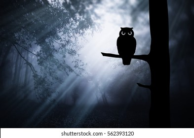 Gloomy Halloween landscape. Owl silhouette on tree branch in dark scary forest at night