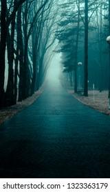 gloomy park paths in the fog