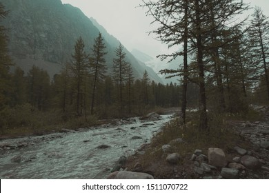 Gloomy photo of nature. A gray river with stone shore surrounded by conifers and branched shrubs. Misty mountain valley with snowy peaks. Frightening twilight in the mountains. Toned photo.