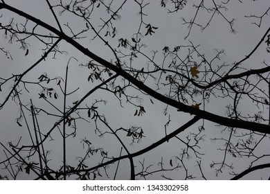 gloomy tree branches