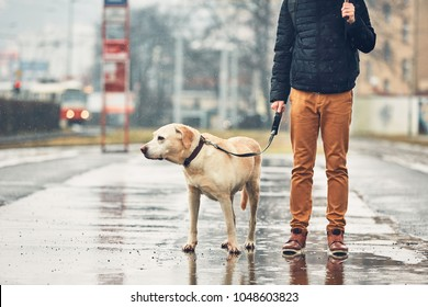 Gloomy weather in the city. Man with his dog (labrador retriever) walking in rain on the street. Prague, Czech Republic.