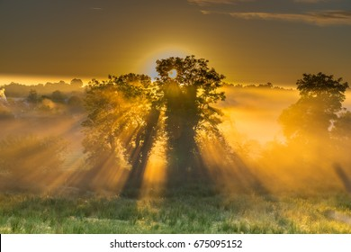 A glorious sunrise with sun rays and mist, shining through the trees.