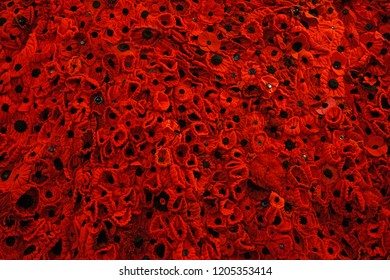 Gloucester, Gloucestershire, UK, October 17th, 2018, a close up of the GCHQ Poppy waterfall appeal on display in Lady Chapel Gloucester Cathedral consisting of 9000 hand made wollen/fabric poppies.