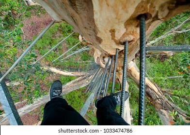 Gloucester Tree Climb - Pemberton - Australia