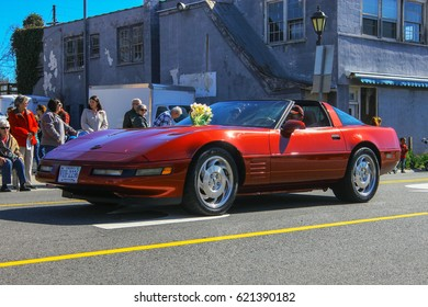 GLOUCESTER, VA - April 1, 2017: A maroon 1980's Chevrolet Corvette in the 31st annual Daffodil fest and parade, The Daffodil fest and Parade is a regular event each spring in April