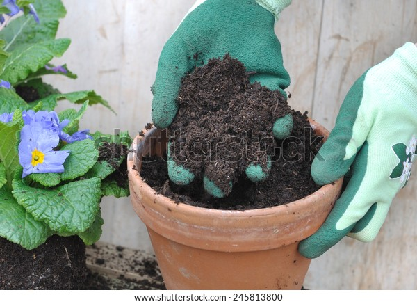 gloved hand holding loam over a flower pot