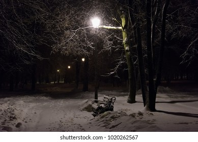 glow lamp on pole in winter on a background of a tree covered with a layer of snow at night