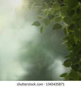 Glow Morning. Overcast in the deep forest, natural backgrounds