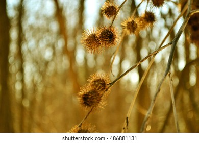 Glowing burs on blurry background. Dreamy isolated burs