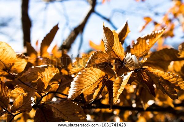 Glowing Fall Leaves in Spring
