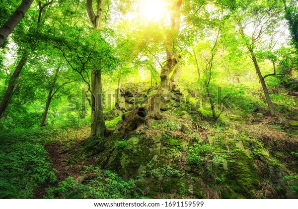 Glowing forests by a lot of sunshine