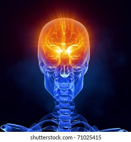 Skull Front View Images, Stock Photos & Vectors   Shutterstock Skull X Ray Views Chart
