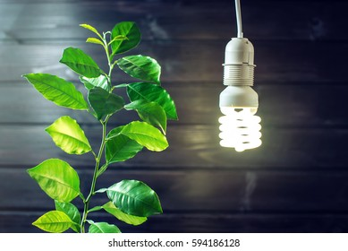 Glowing light bulb and the green sprout of a young tree, plants on a dark wooden background. Concept of environmental energy, ecology of the planet, careful use of electricity