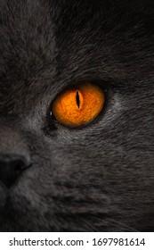 Glowing orange eye close up