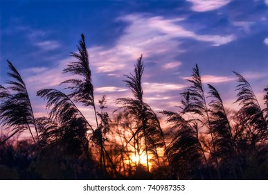 Glowing sunlight shining through phragmite grasses on a wwtland on the Chesapeake bay in Maryland at sunset