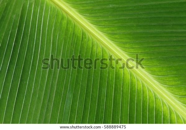 glowing tropical leaf