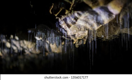 Glowworm threads in a cave in New Zealand. Cave glow-worms vomit long sticky urine threads to catch prey