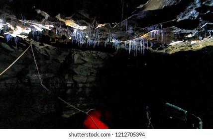 Glowworms filaments inside a cave, Waitomo, New Zealand.