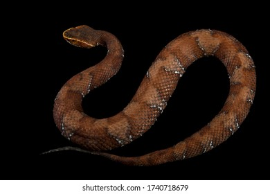 Gloyd's cantil and black background