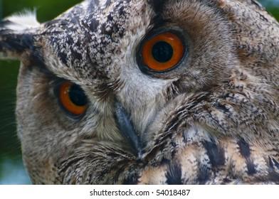 glue with orange eyes