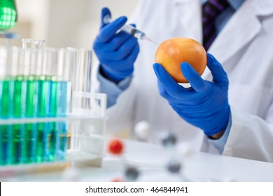 GMO experiment scientist injecting liquid into orange in agricultural research laboratory