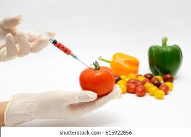 GMO experiment scientist injecting liquid into tomato on white background