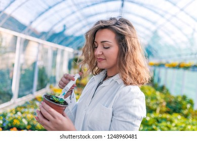 GMO Scientist Injecting Liquid from Syringe into the plant. Woman conducts experiments on a plants in a greenhouse. Genetic modification. Scientist treating a plant with chemicals