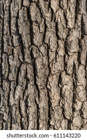 Gnarly tree bark background
