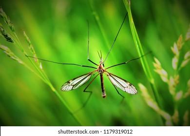 gnat on grass