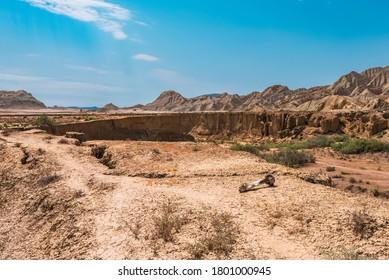 Gnawed eaten animal bone in desert