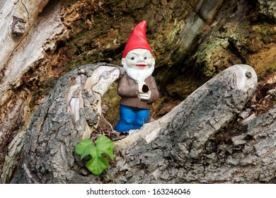 gnome in its house