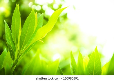 Go Green Concept Leaves Background