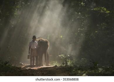 Go to school on elephants